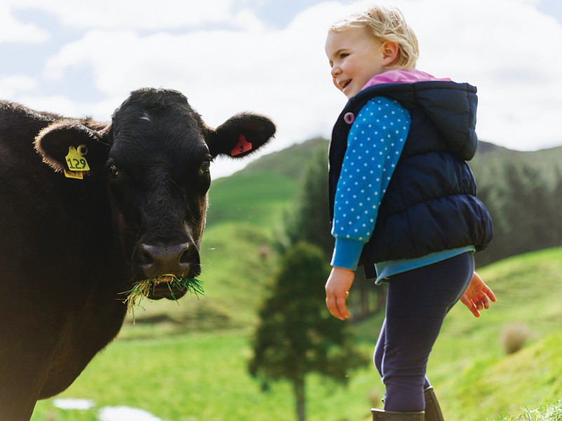Little girl with cow on farm
